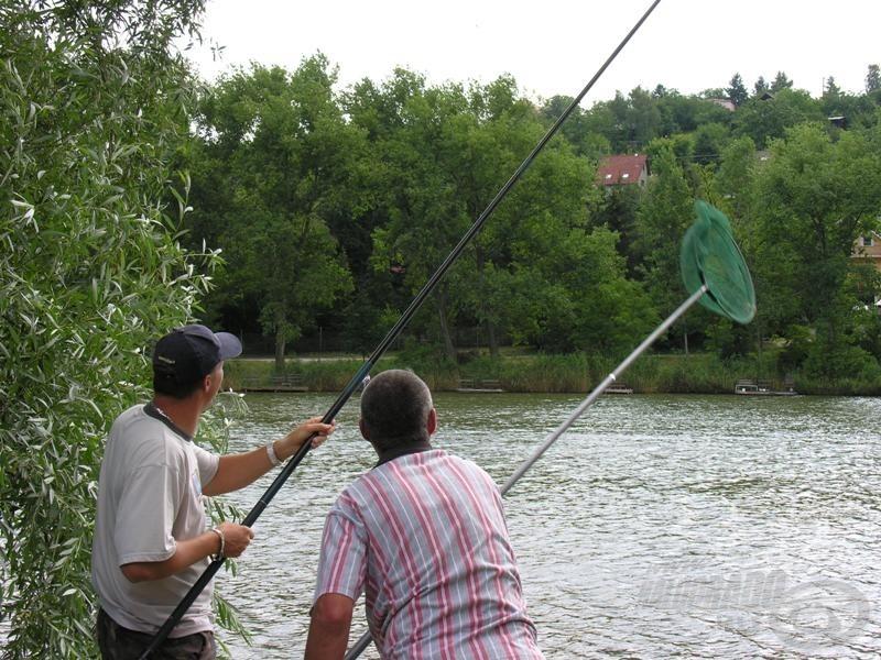 A Zergetollas Kazuárok madarászás közben