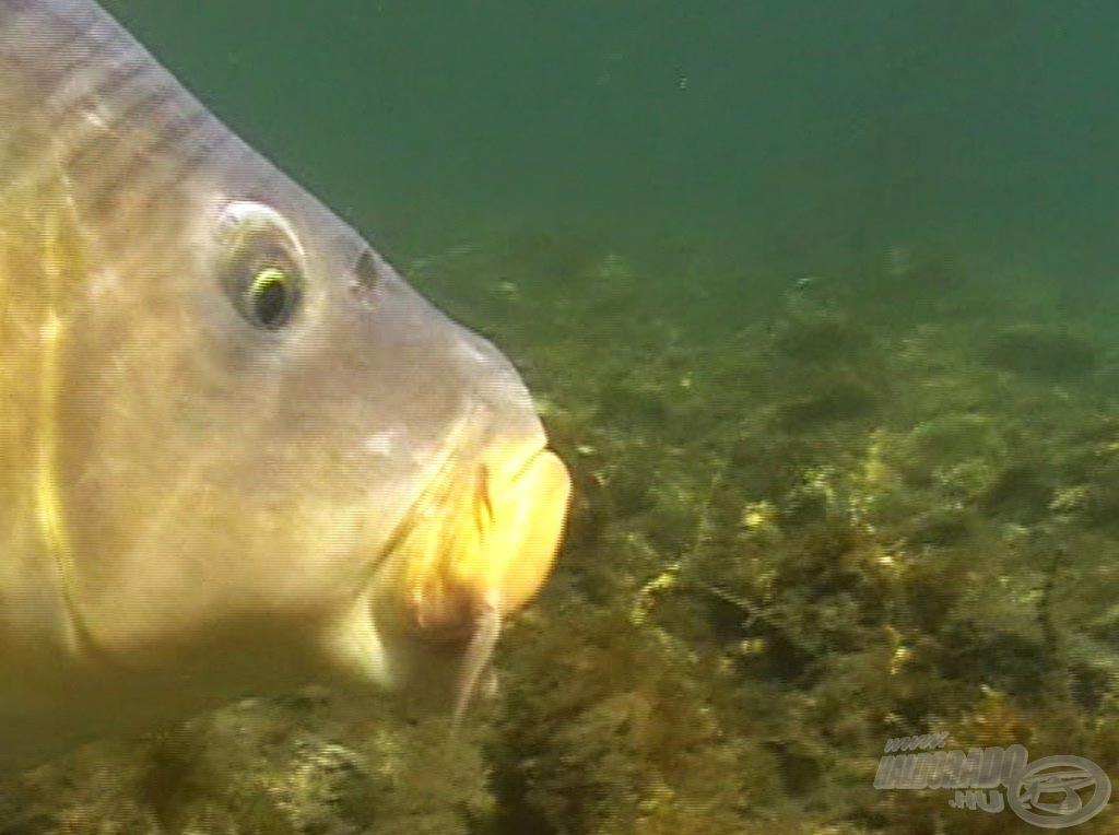 A most elkészült filmet olyan páratlan víz alatti felvételek teszik teljessé, amelyeket eddig soha, sehol nem tudtunk felvenni!