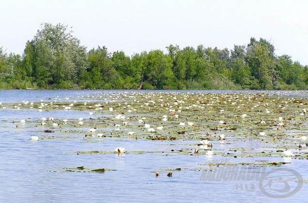 A tó és környezete gyönyörű! (forrás: www.tiszato.hu)