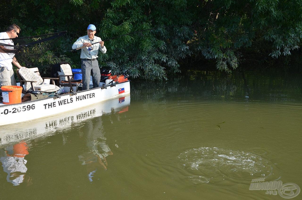 A ponty mindent megtett, hogy megszabaduljon a horogtól. Elsőként a fák ágai közül sikerült kihúzni, majd a csónak alól kellett kifordítani…