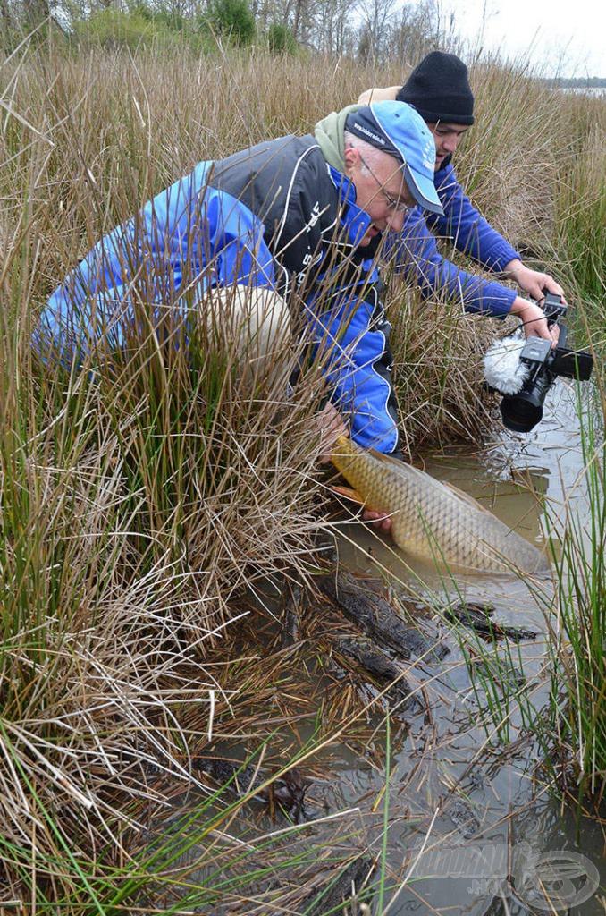 A növényzetben található folyósokban úszkáltak a halak (nemcsak akkor, amikor visszaengedtük őket)