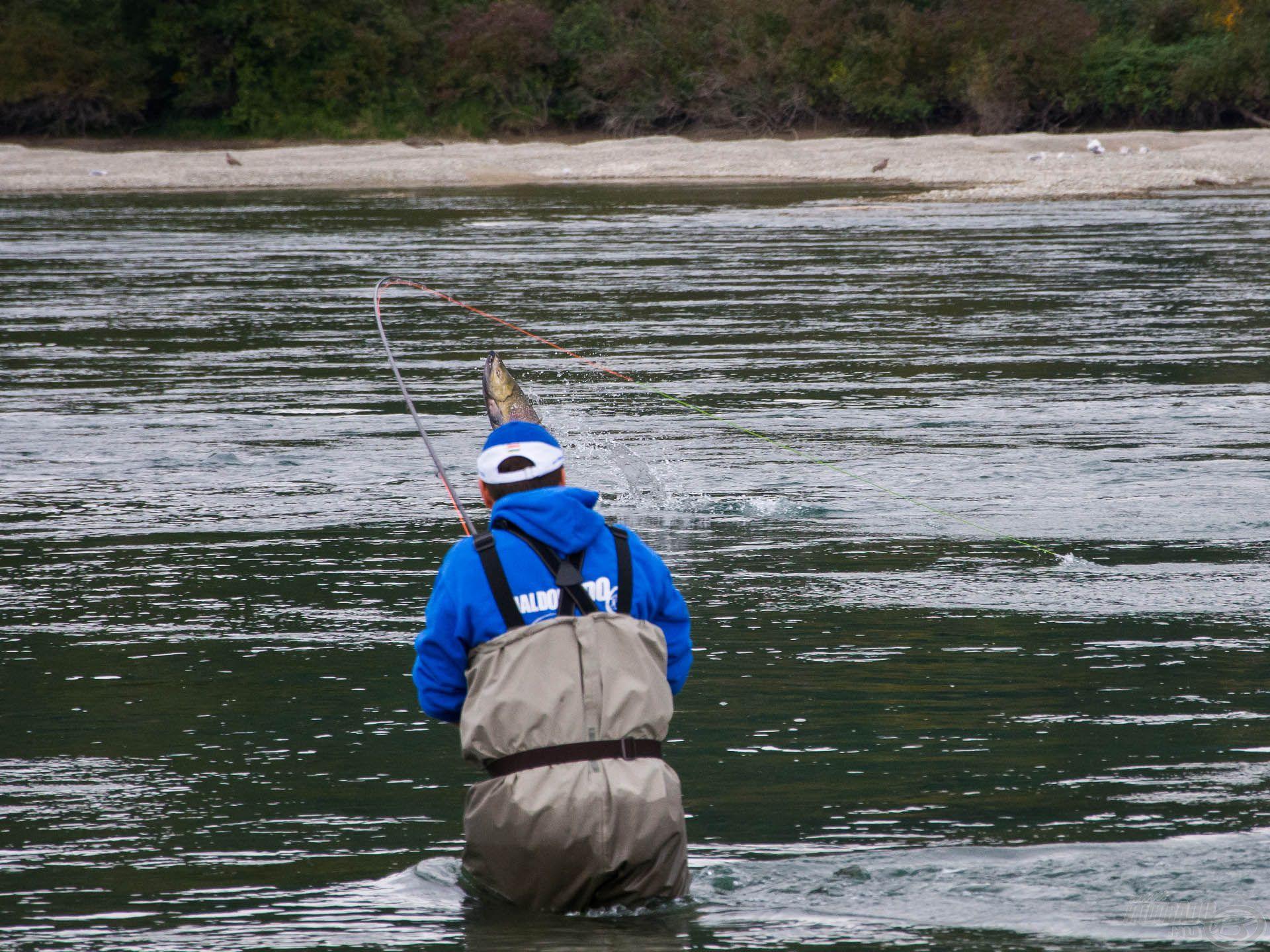 A zsinór is alig bírja követni a vágtató halat