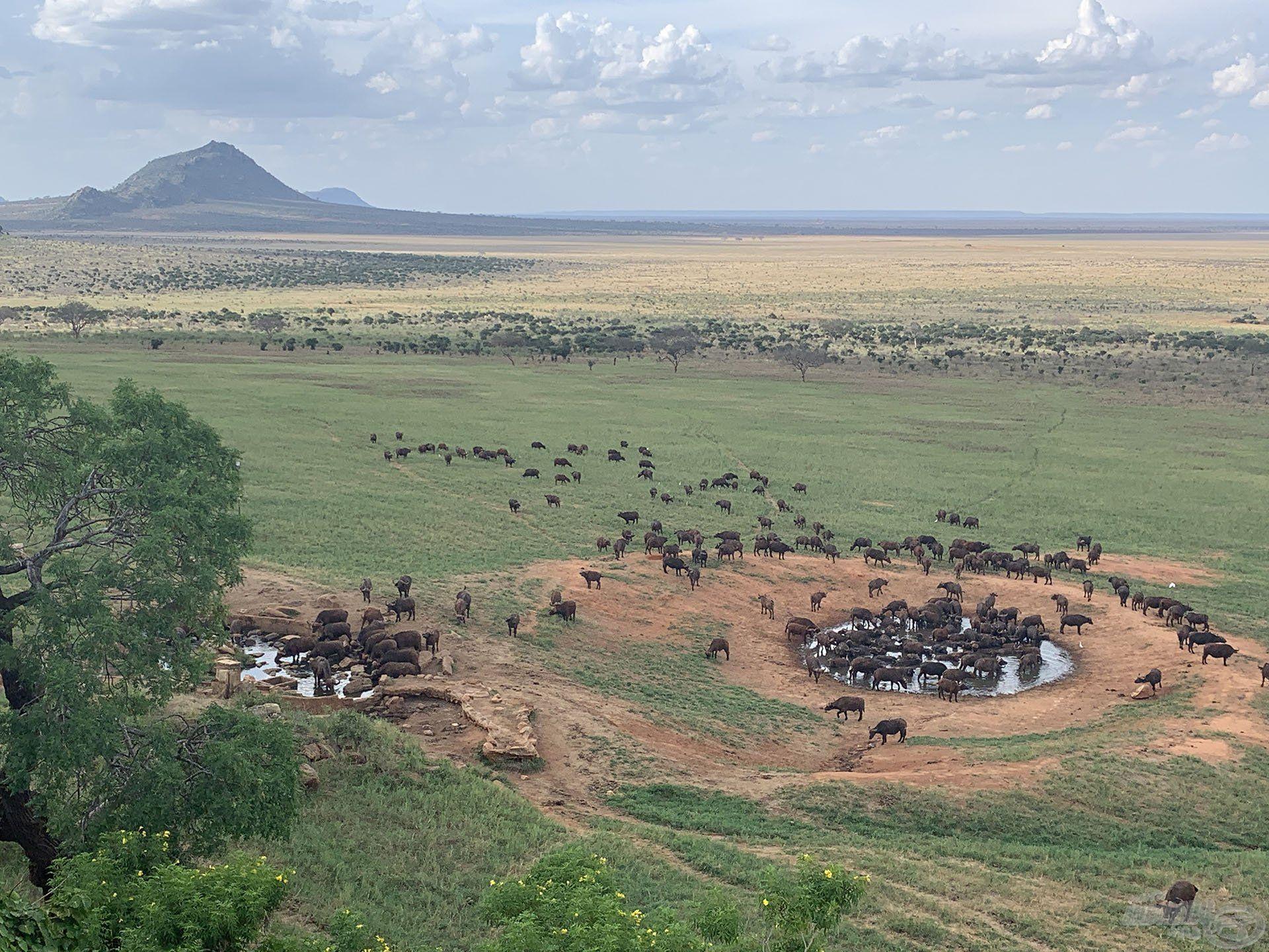 Talán elsőként Kenyáról az afrikai vadvilág jut az eszünkbe…