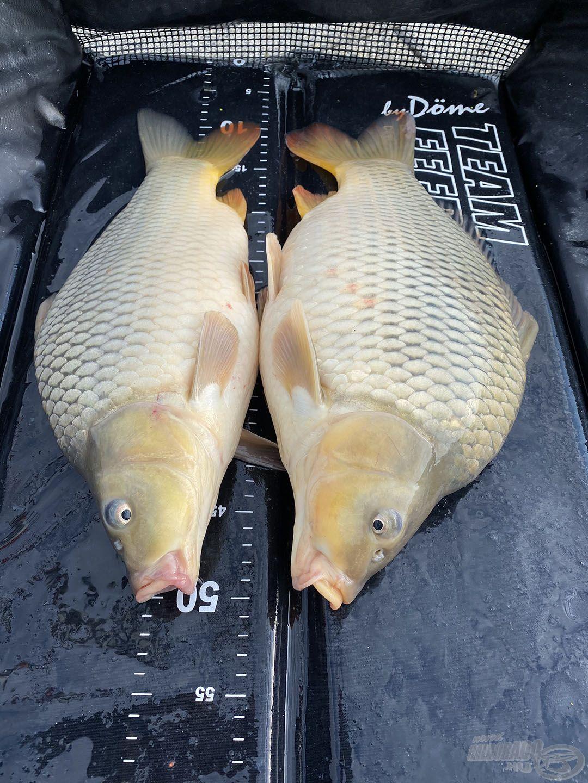 A délután második felében kezdett a horgászat felélénkülni, volt olyan is, amikor (szinte) egyszerre kettő halat fáraszthattam