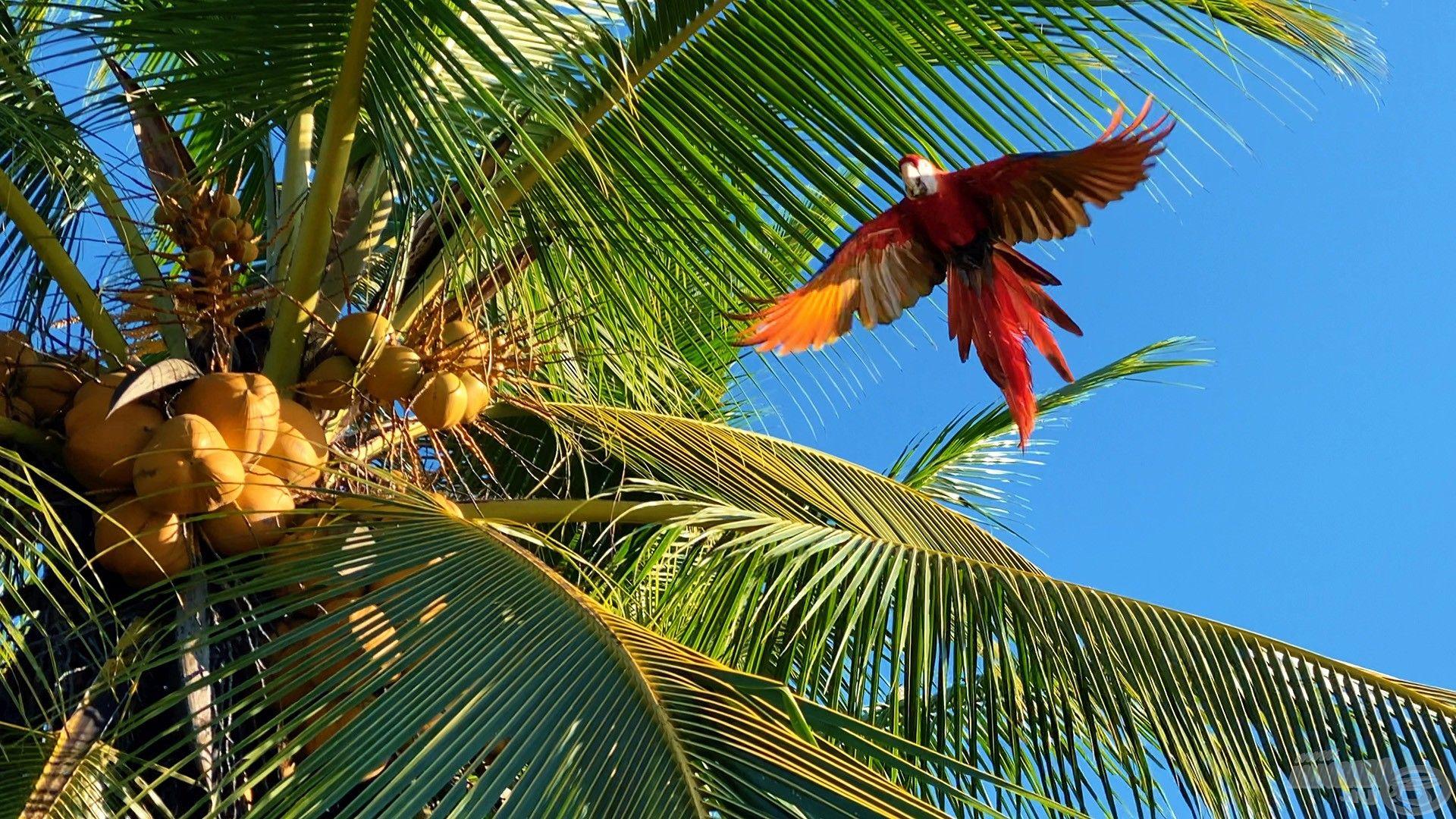 Fejünk felett repkedtek a színesebbnél színesebb madarak is
