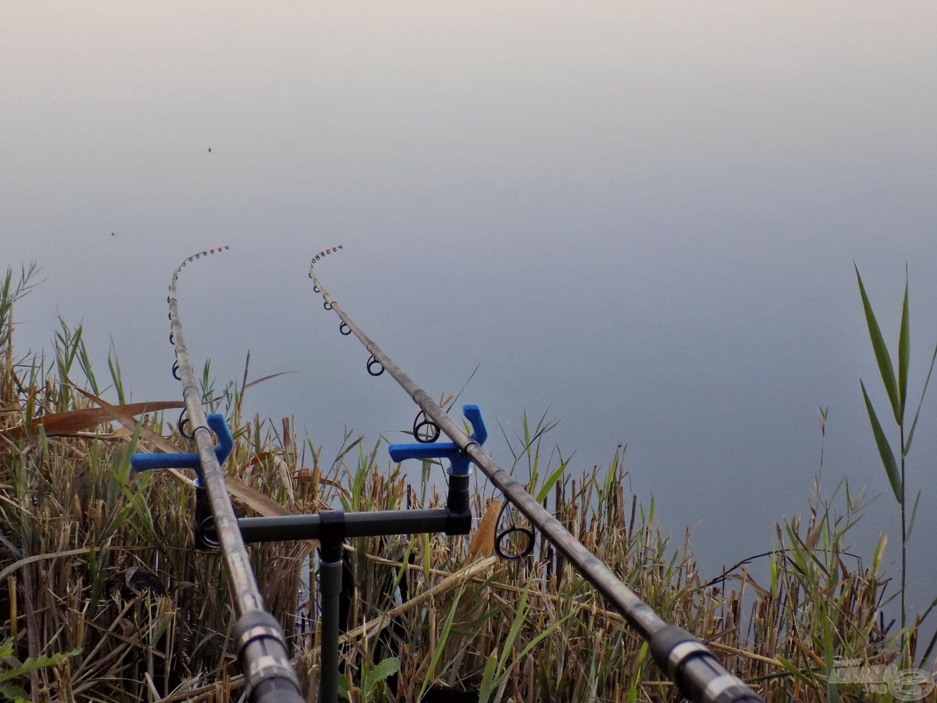 Feederbotjaim már a reggeli hidegben beélesítve várták a halak érdeklődését. A spiccek szuggerálása és a halfordulások kémlelése közben…
