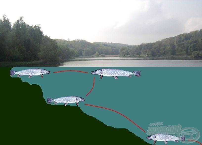 """A csukák """"vándorlása"""" a horgásznap folyamán"""
