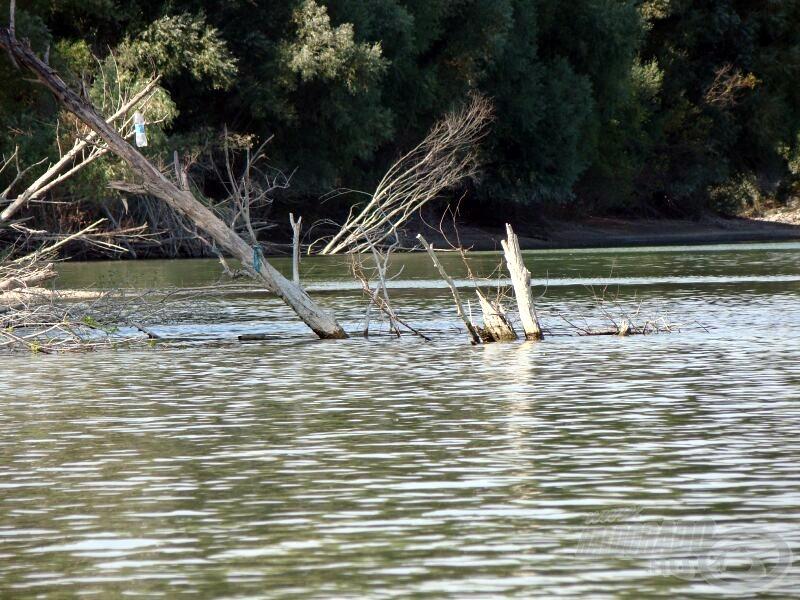 A vízbe csúszott tuskókban szívesen horgászom otthon, így ez ismerős terep, csak ezek nem a partszélen, hanem 20-30 méterre vannak a parttól