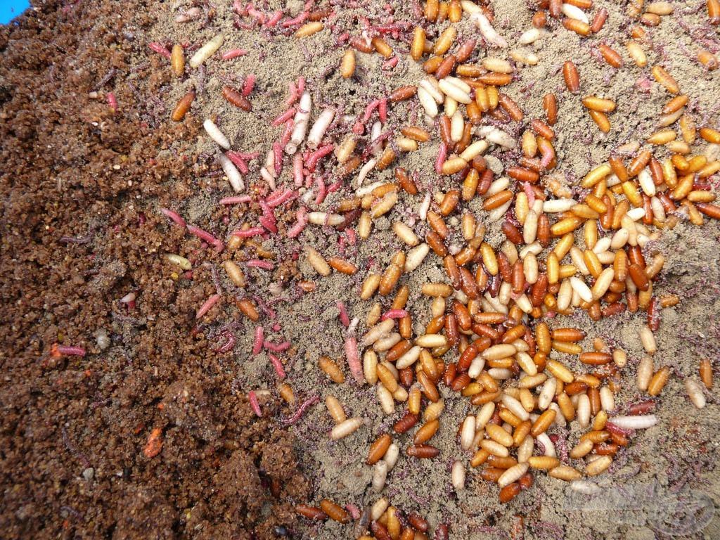 A kosárba szánt etetőanyag és földes szúnyog élő anyaggal van megspékelve