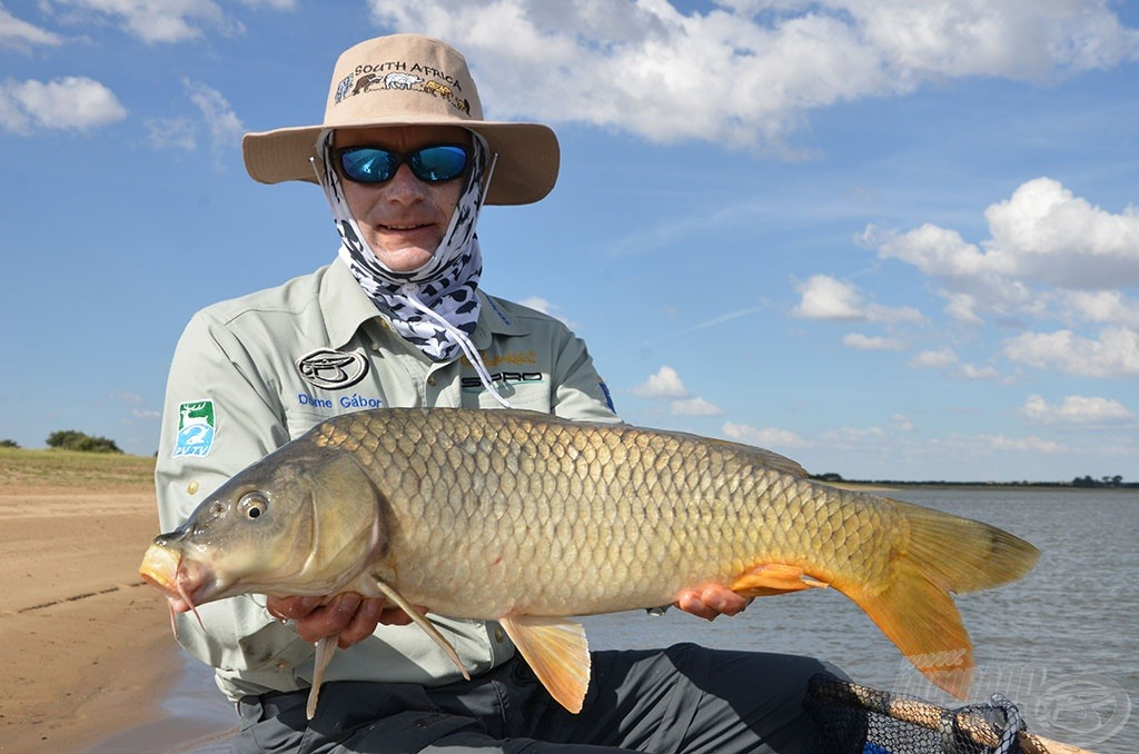 Ez a hal idén márciusban Dél-Afrikában, a novemberben megrendezésre kerülő Feeder Világbajnokság helyszínén akadt Gábor horgára. Ha sikerül a pálya titkát a verseny időszakában is megfejteni, ilyen szép halakra lehet majd számítani. Mi drukkolunk nektek!!!