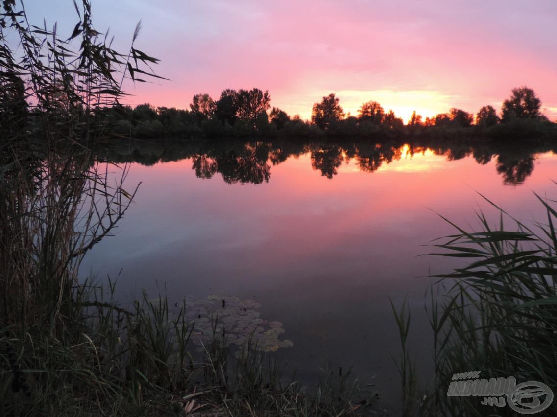 Horgászhelyem mellett nádas, előtte tavirózsák… igazi vadregényes, vadvízre hasonlító környezet. Ezért is szeretek itt horgászni