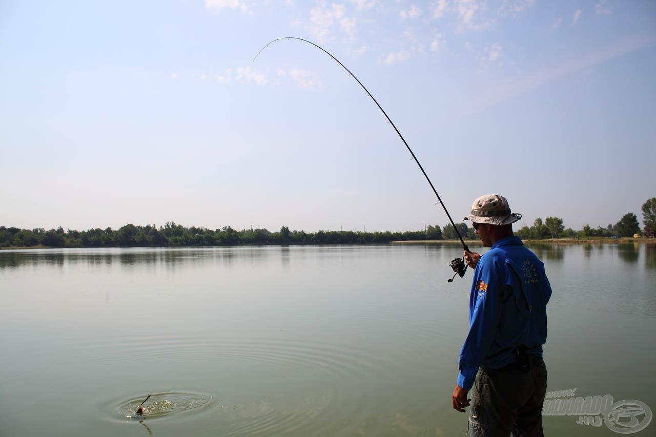 A fárasztás utolsó pillanataiban a precíz fékkel minimálisra csökkenthető a halvesztés annak ellenére is, hogy a meleg vízben nagyon elemükben vannak a halak