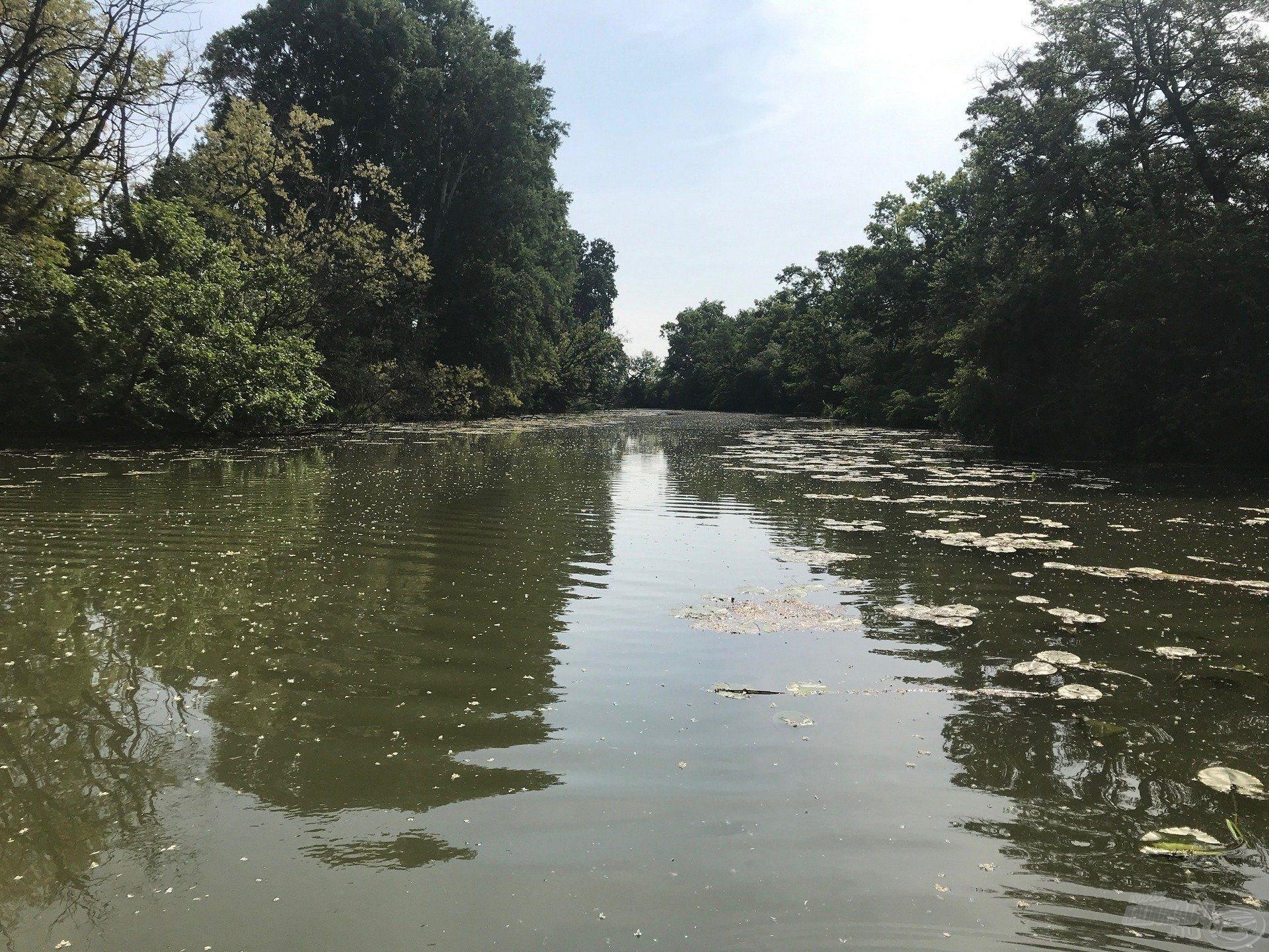 Tavakon is bosszantó, de folyóvizeken nagyon megnehezíti a horgász dolgát