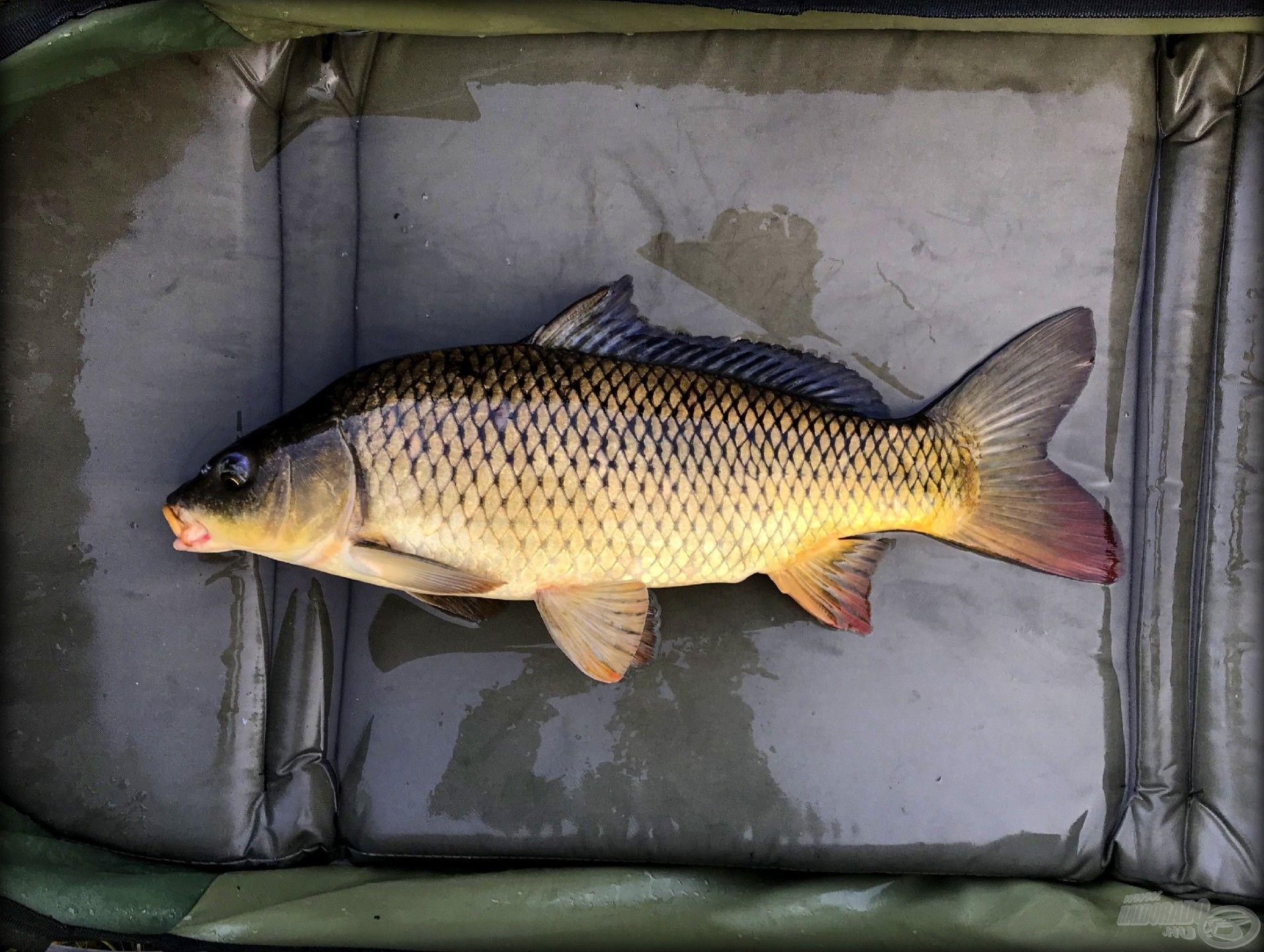 Az ilyen halakat…