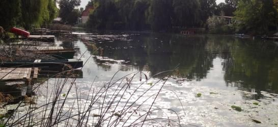 Zátonyi Holt Duna-ág